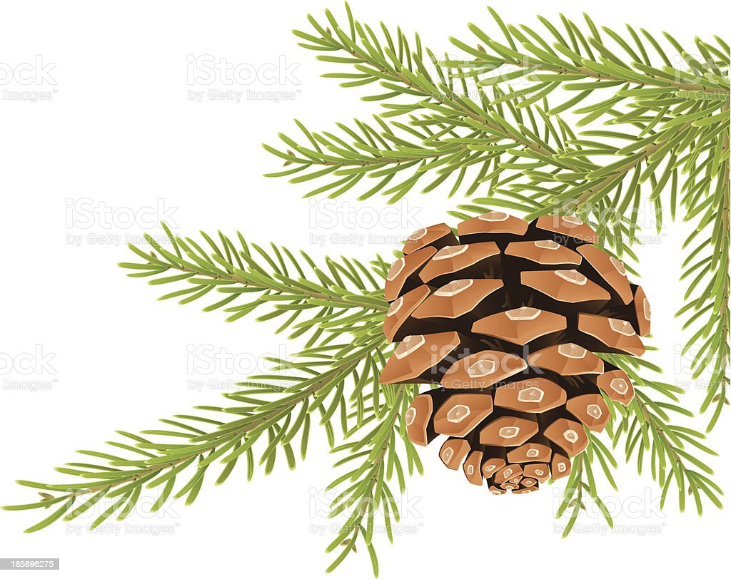 Pine tree branch with one cone vector art illustration
