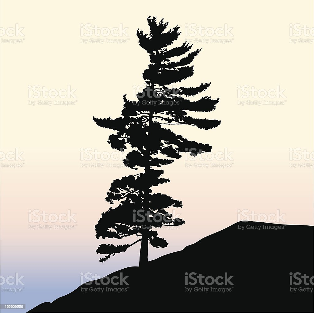 Pine Tree Silhouette royalty-free stock vector art