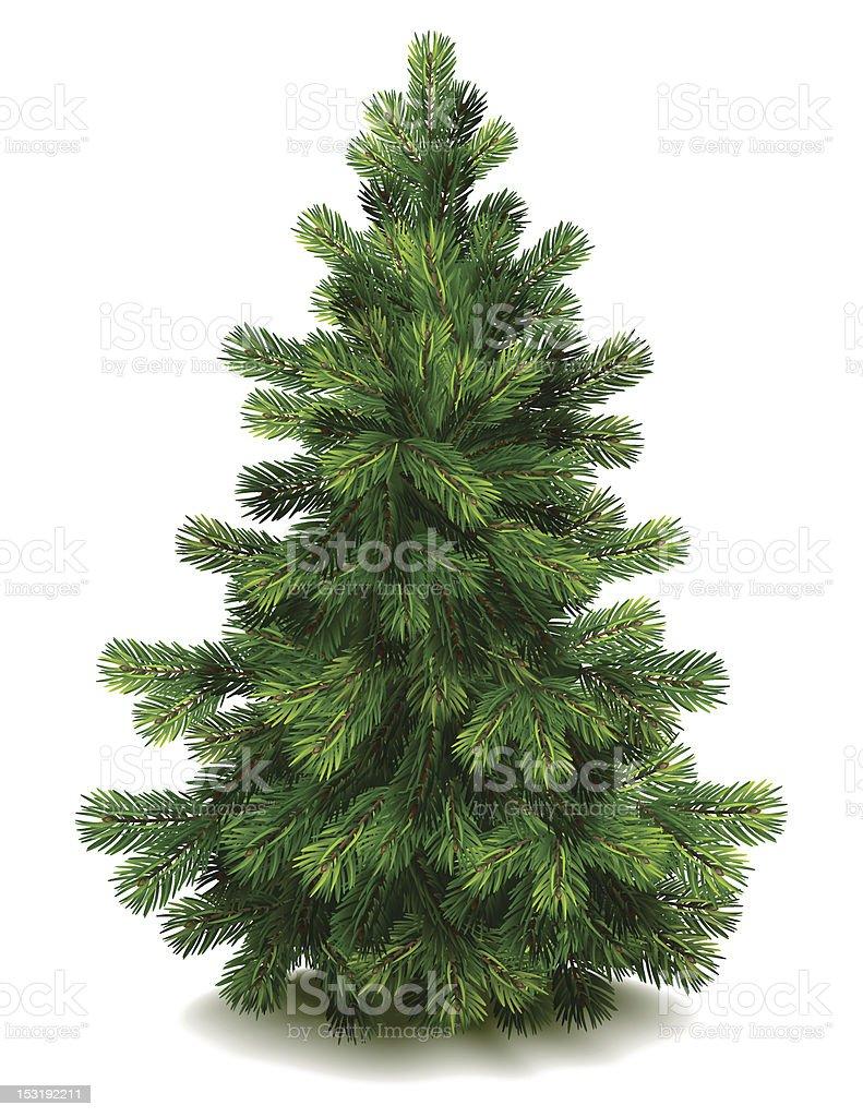 Pine tree vector art illustration