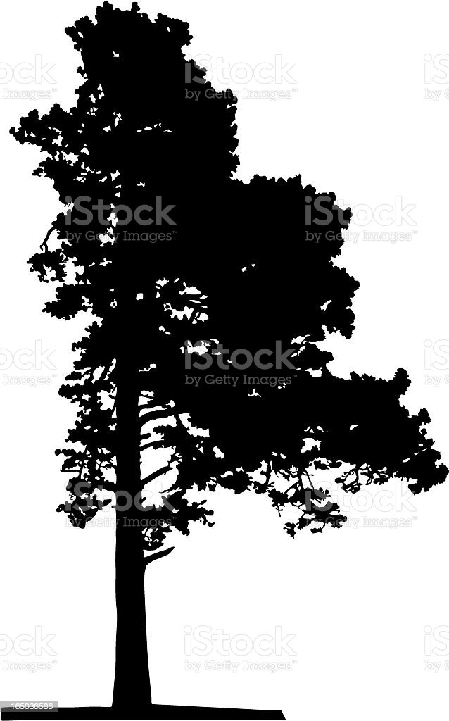 Pine tree, Vector royalty-free stock vector art