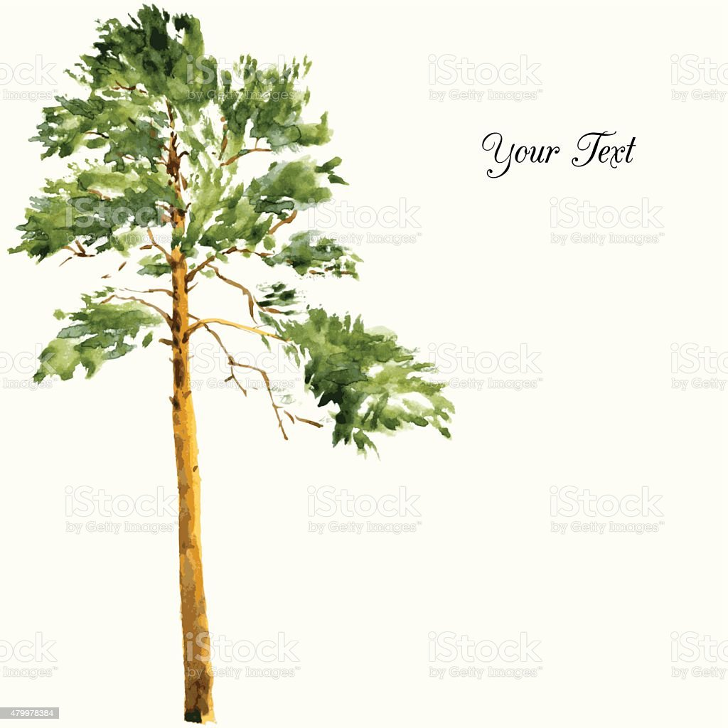 pine trees and rocks vector art illustration