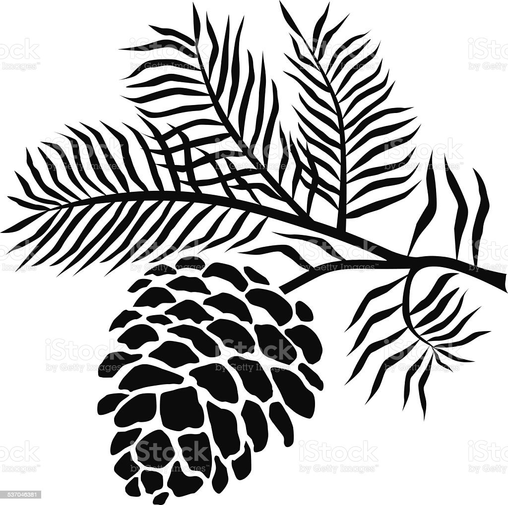 pinecone on branch in black and white vector art illustration