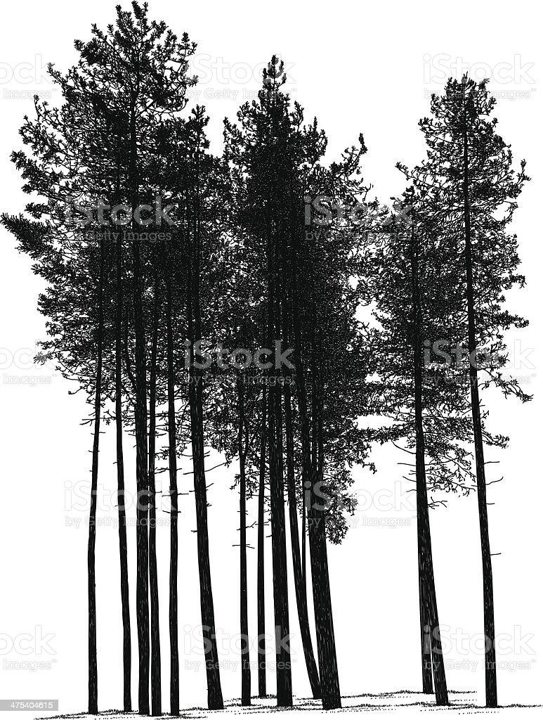 Pines vector art illustration