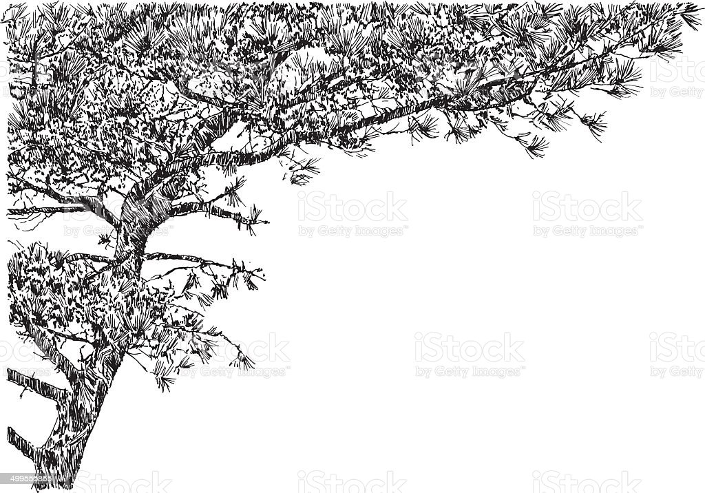 PineTree vector art illustration