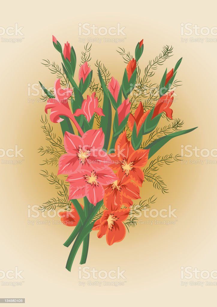 Pink and red gladioluses vector art illustration