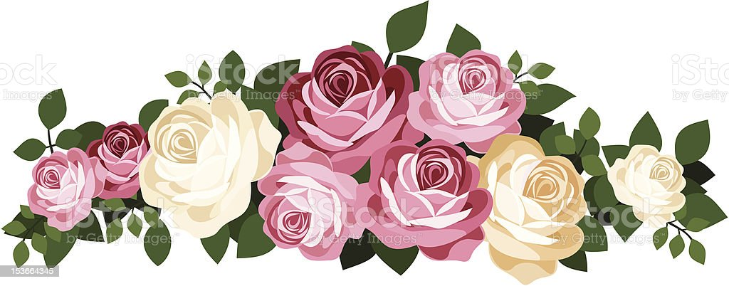 Pink and white roses. Vector illustration. royalty-free stock vector art