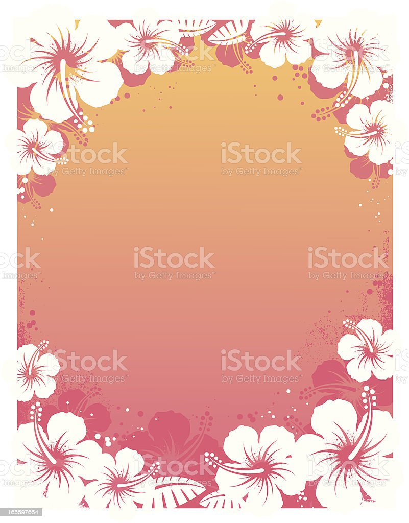 Pink and yellow background with white hibiscus flowers vector art illustration