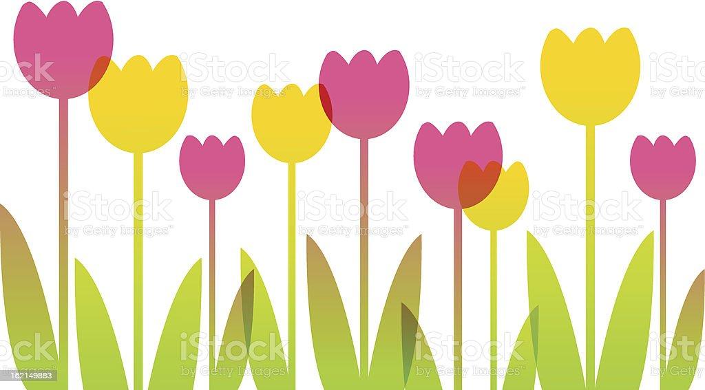 Pink and yellow cartoon tulips vector art illustration