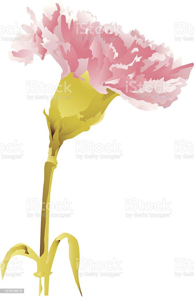 Pink Carnation royalty-free stock vector art