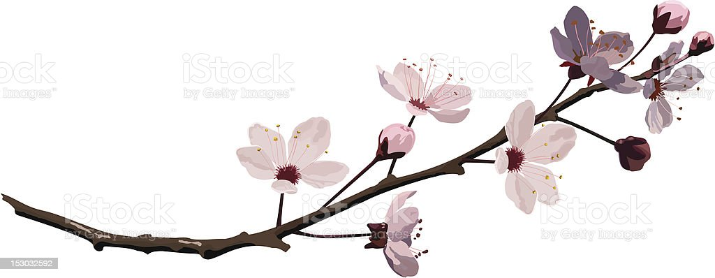 Pink Cherry Blossom royalty-free stock vector art