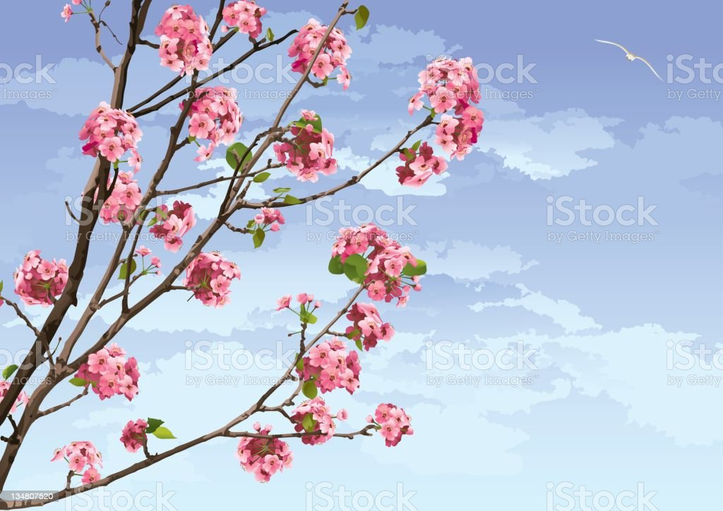 Pink Cherry Blossoms Sakura royalty-free stock vector art