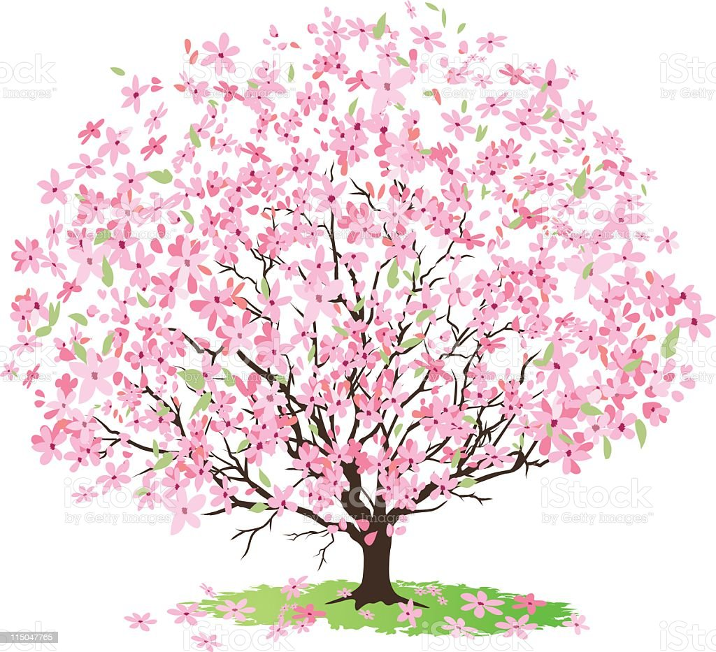 Pink Cherry Tree in Full Bloom with Lots of Blossoms royalty-free stock vector art