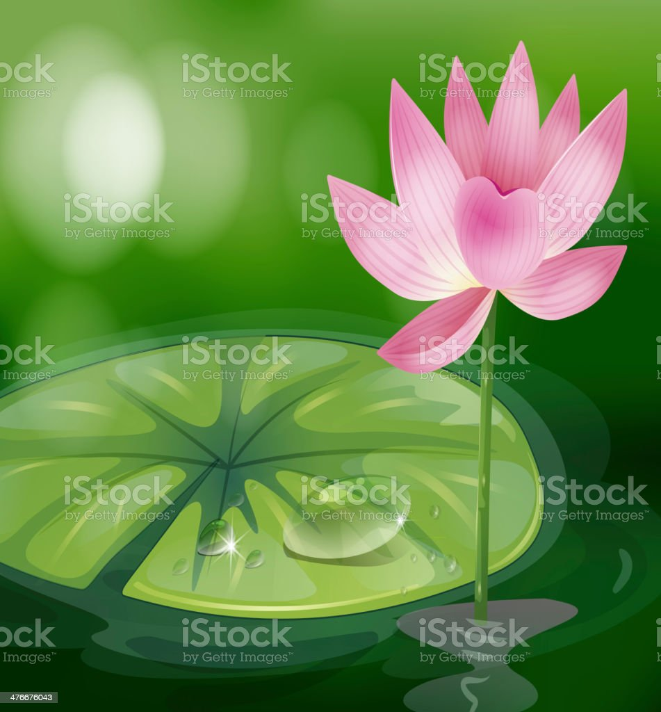 pink flower at the pond royalty-free stock vector art
