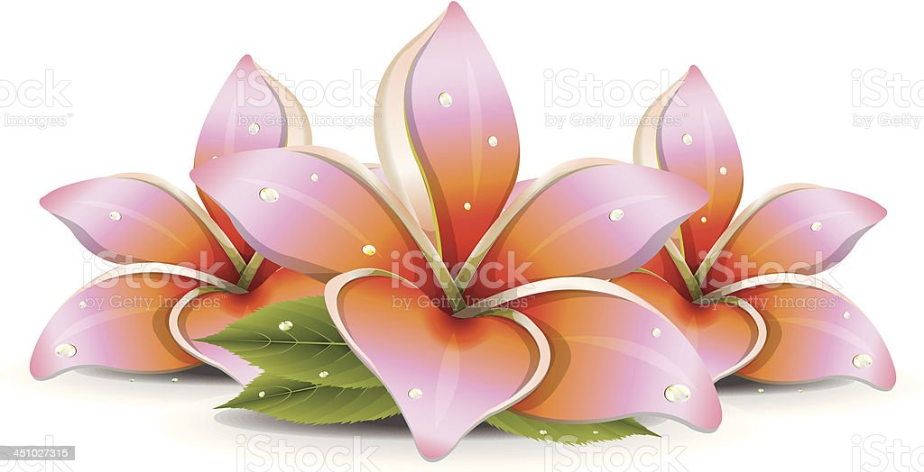 Pink Lilies royalty-free stock vector art