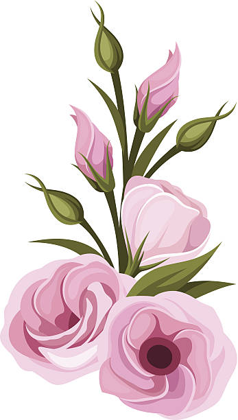 Lisianthus clip art vector images illustrations istock for Lisianthus art floral