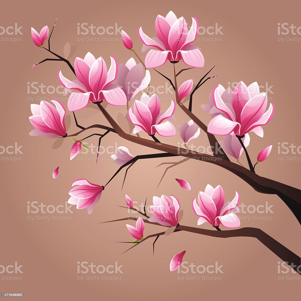 Pink magnolia flowers vector art illustration