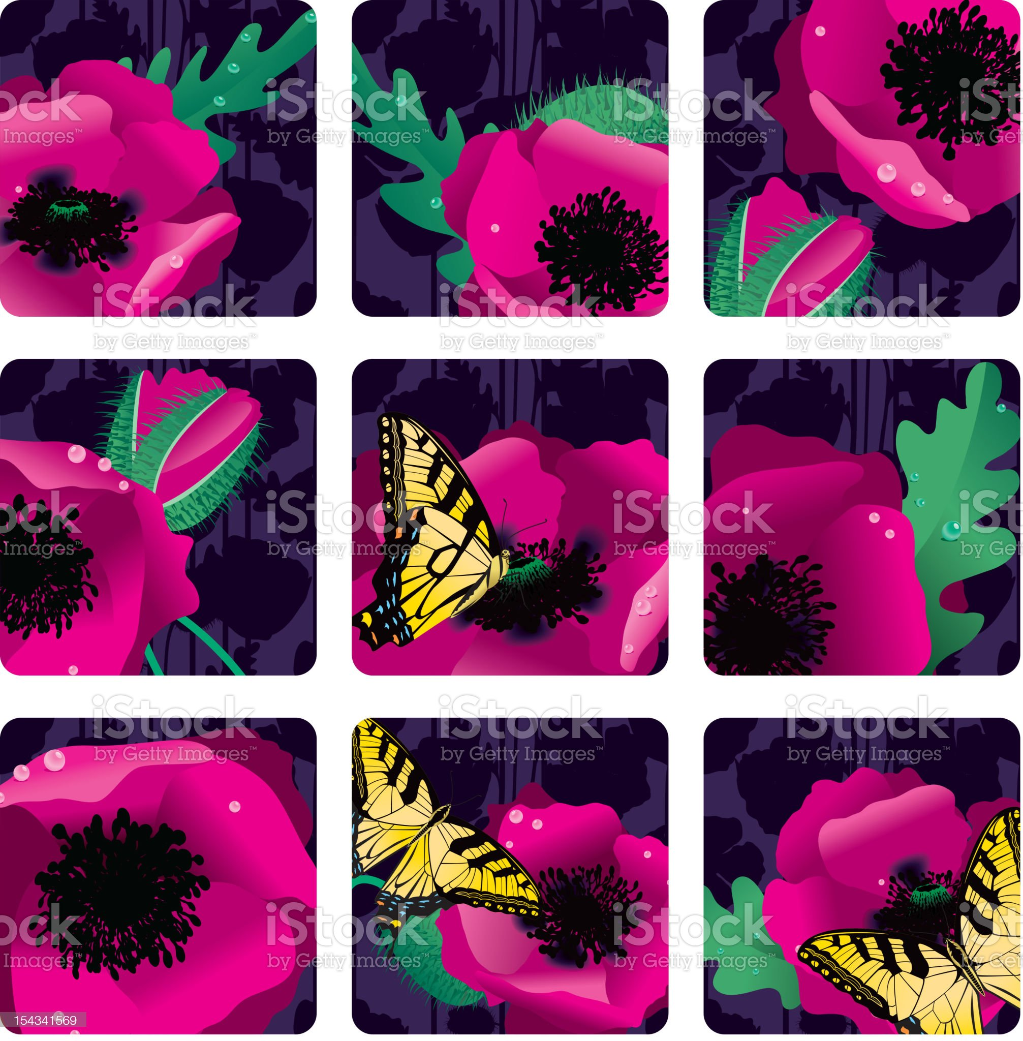 Pink Oriental Poppies at Night Squares or Icons royalty-free stock vector art
