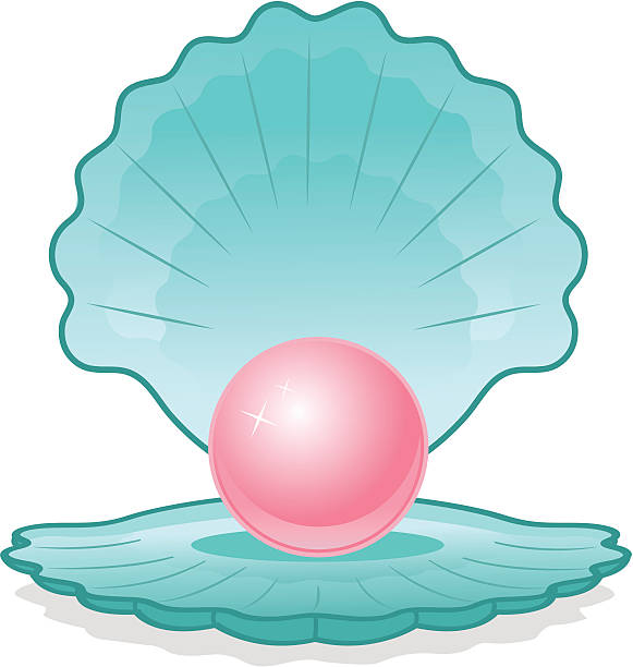 Pearl Oyster Clip Art, Vector Images & Illustrations - iStock