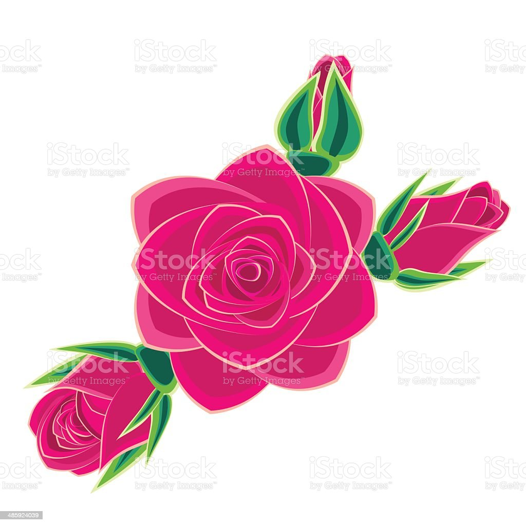 pink rose isolated on white background vector art illustration