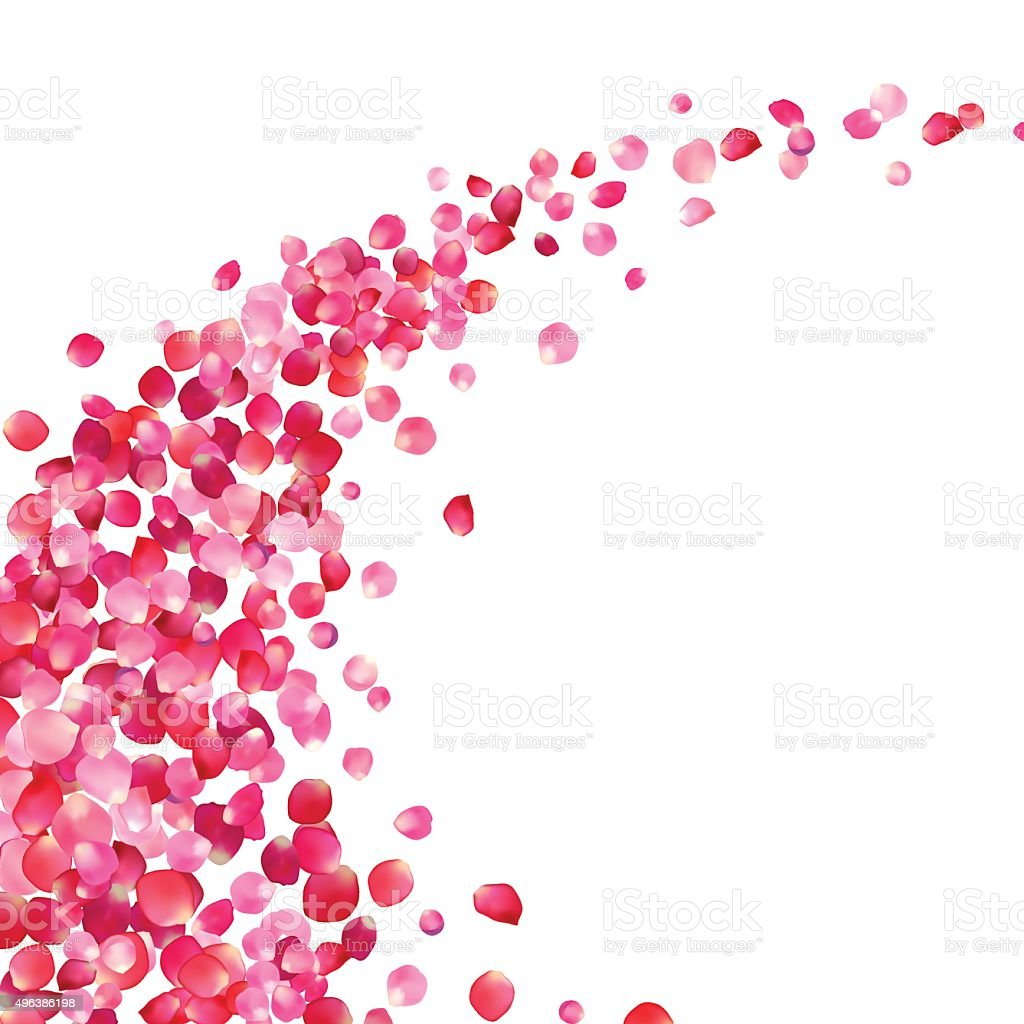 pink rose petals vortex vector art illustration