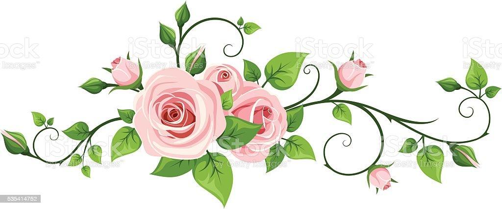 Pink rose vine. Vector illustration. vector art illustration