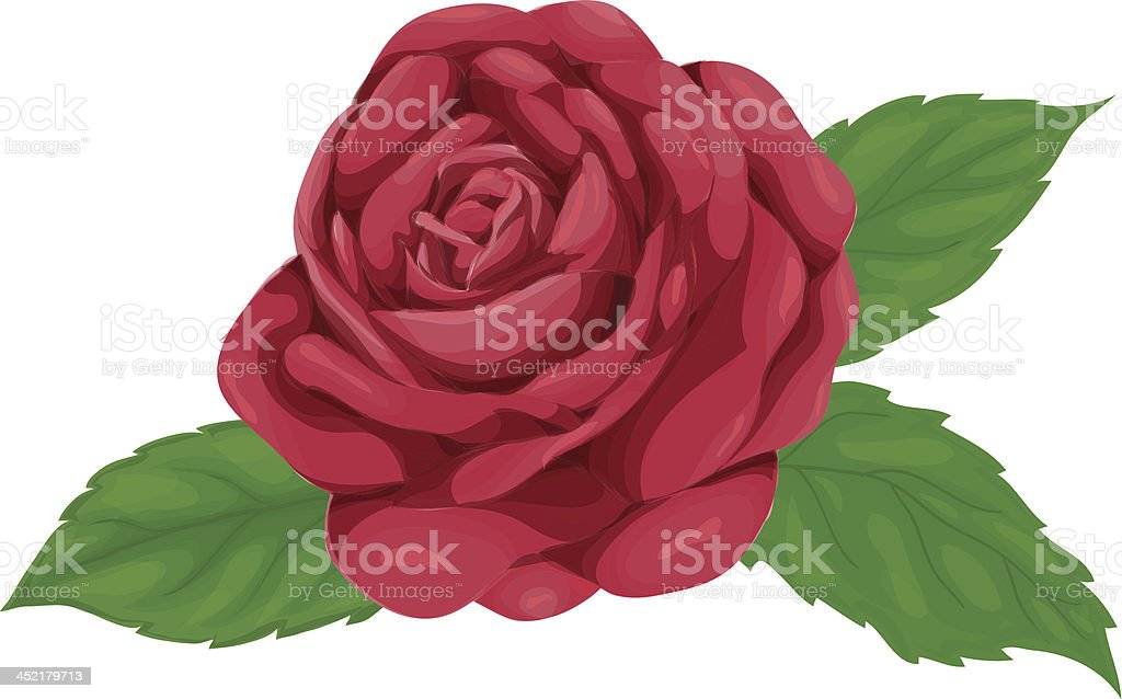 pink rose with leaves isolated on white background royalty-free stock vector art
