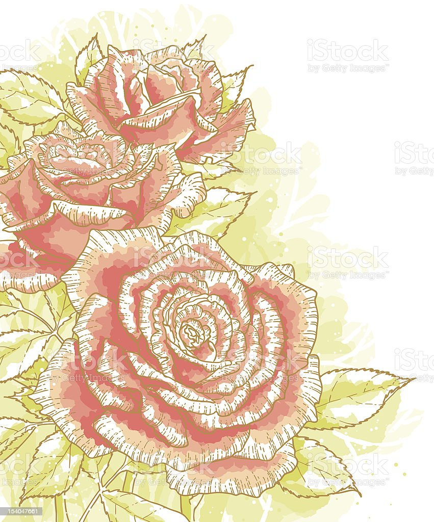 Pink roses on white background royalty-free stock vector art
