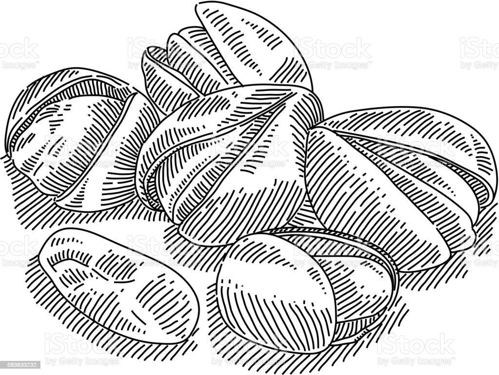 Pistachio Drawing vector art illustration