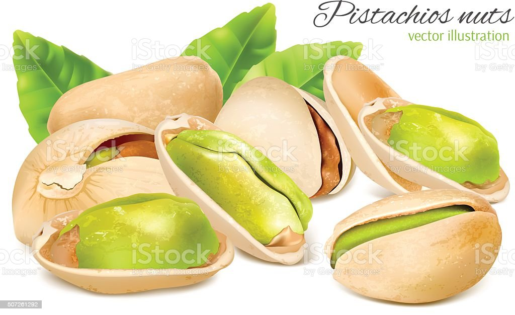 Pistachio nuts with leaves. vector art illustration