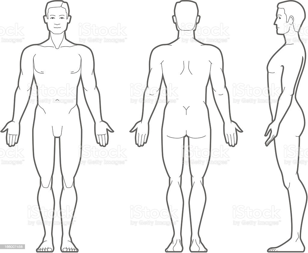 Plain illustration of the male body vector art illustration