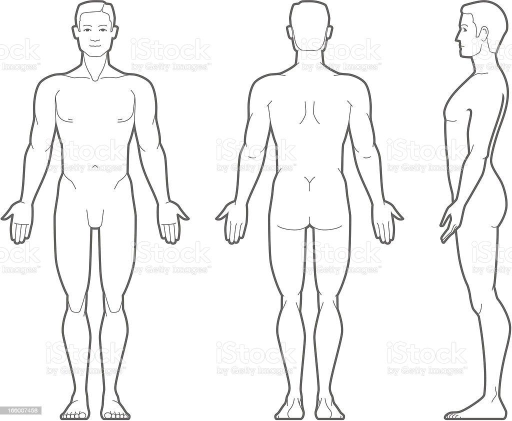 Plain illustration of the male body vector art illustration