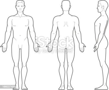 Plain Illustration Of The Male Body stock vector art ...