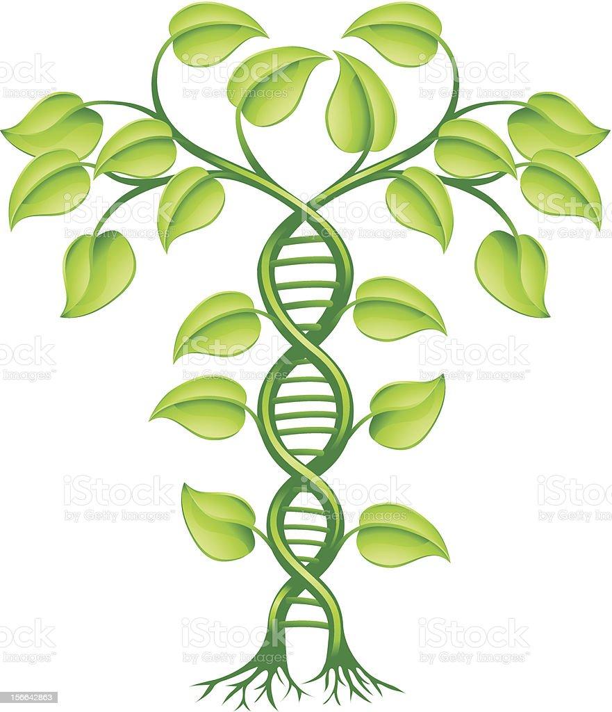 DNA plant concept vector art illustration