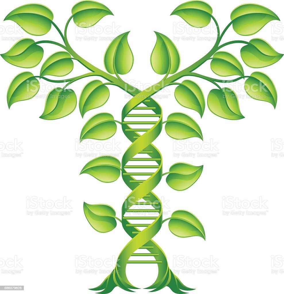 DNA Plant Double Helix Concept vector art illustration