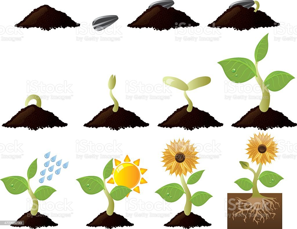 Plant Growth and Needs royalty-free stock vector art