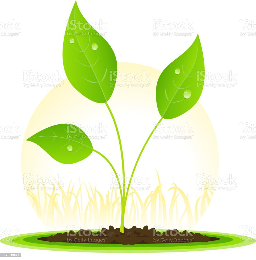 Plant Growth royalty-free stock vector art