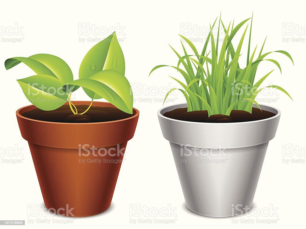 Plant in a pot. royalty-free stock vector art