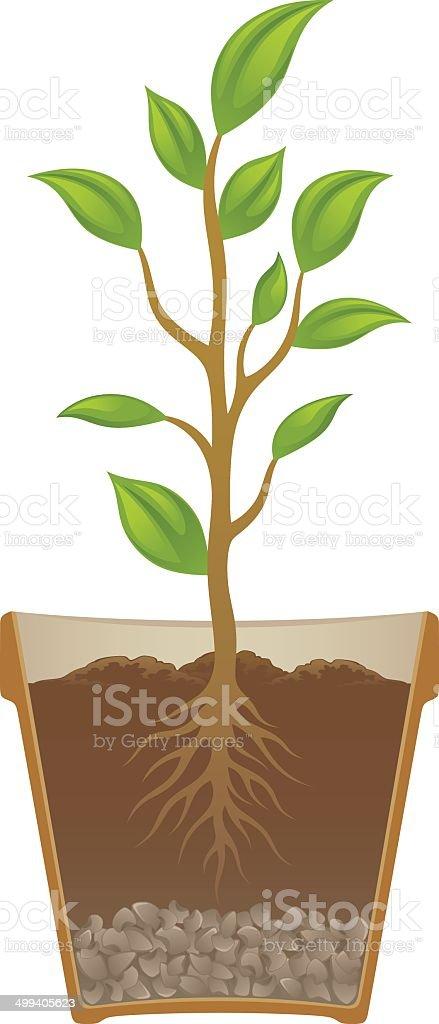 Plant in pot vector art illustration
