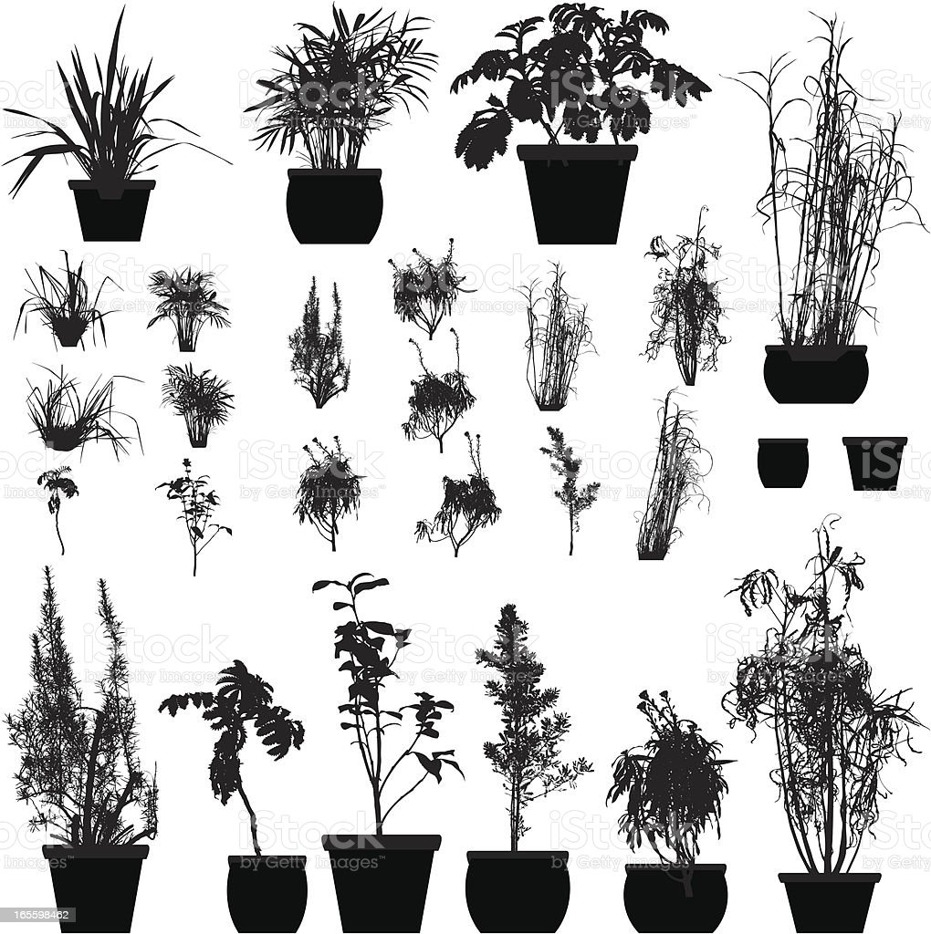 Plant silhouette collection vector art illustration