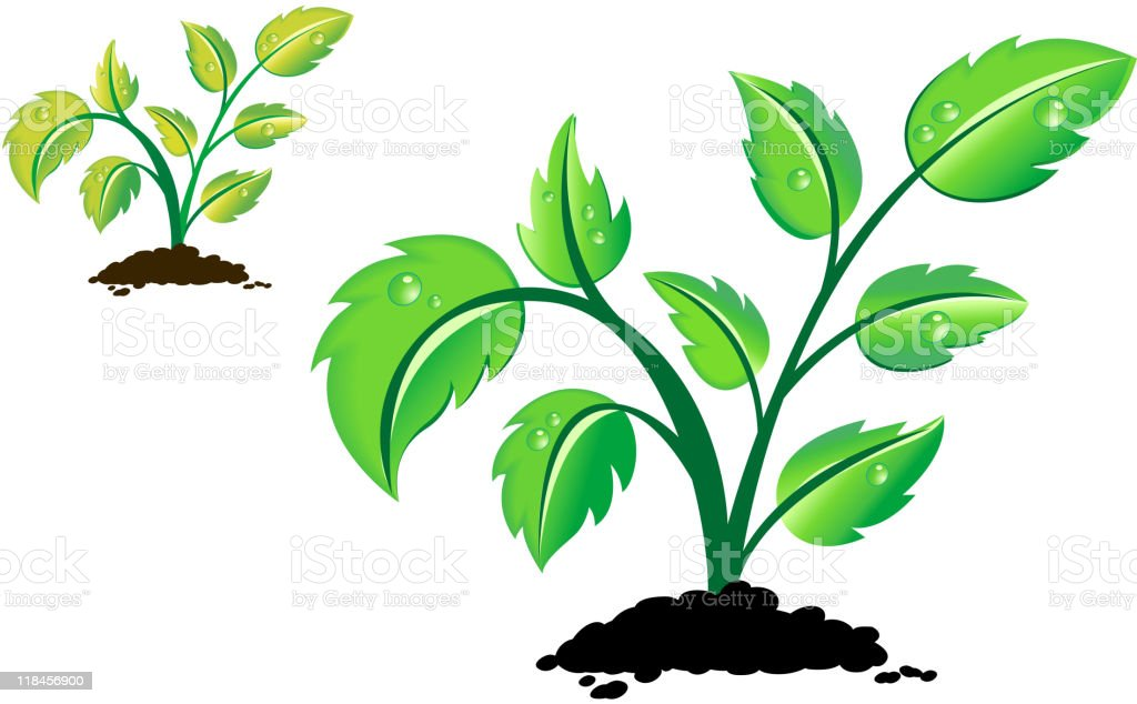 Plant with drops on leaves royalty-free stock vector art
