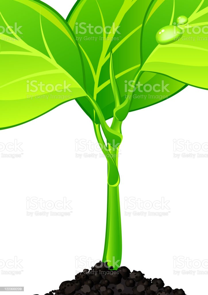 Plant with drops royalty-free stock vector art