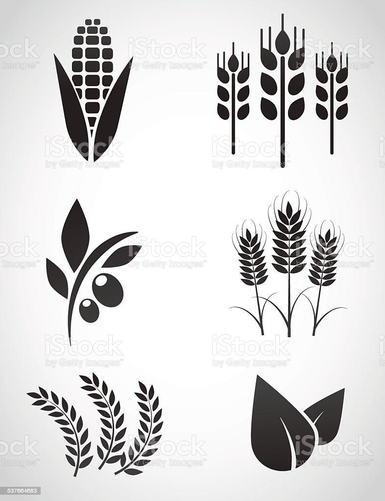 Plantation icon set. vector art illustration