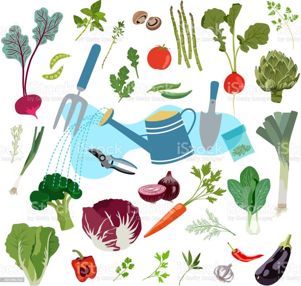 Planting and Harvesting of Fresh Vegetables vector art illustration