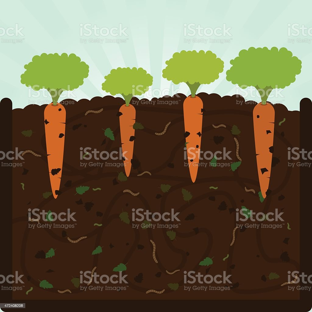 Planting carrots and compost vector art illustration