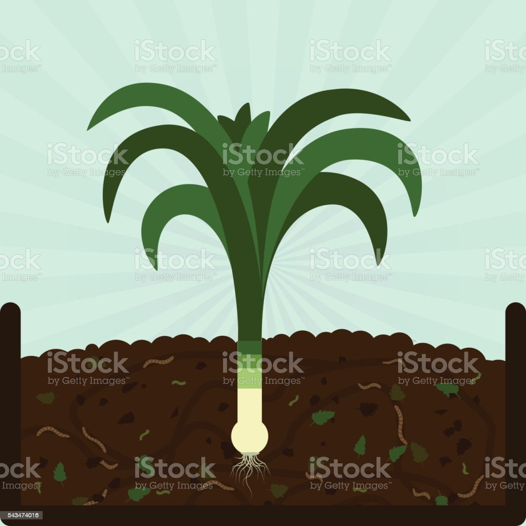 Planting leek and compost vector art illustration