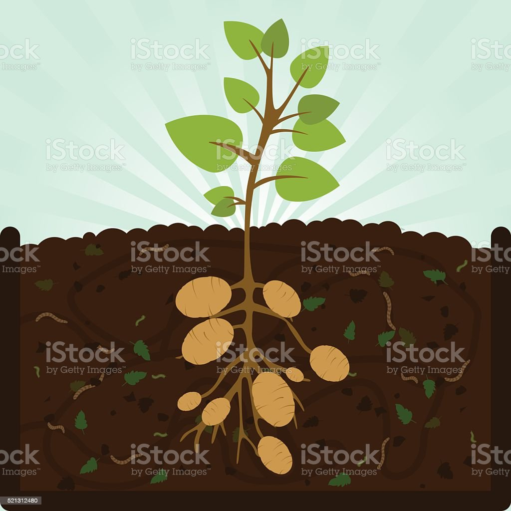 Planting potatoes and compost vector art illustration