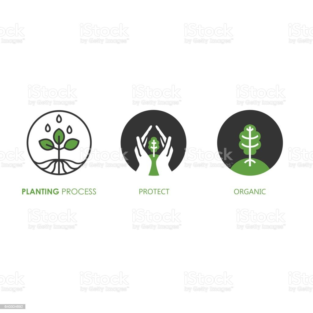 Planting process infographic. Growth stages. vector art illustration
