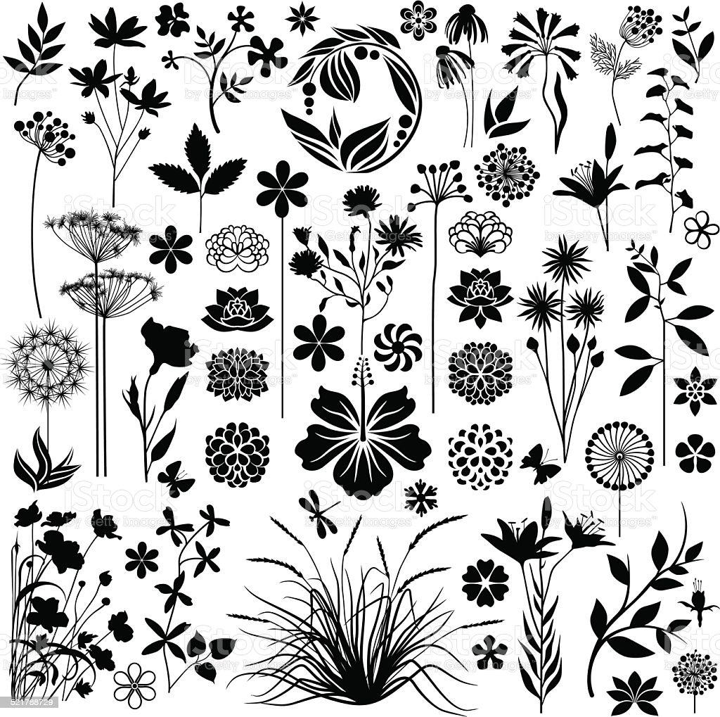 Plants and flowers collection vector art illustration
