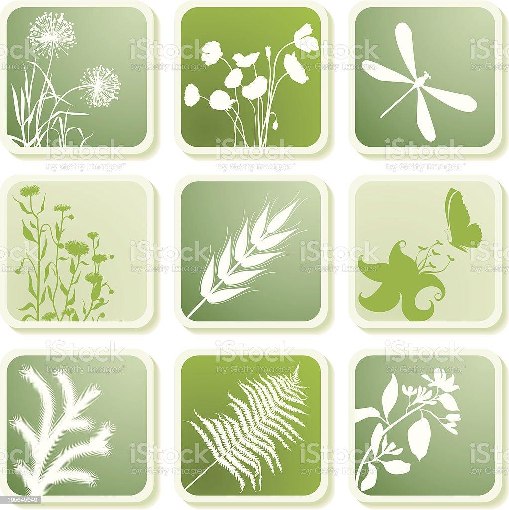 Plants elements royalty-free stock vector art
