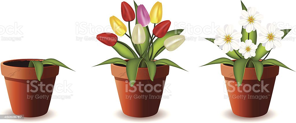 Plants in flowers pot.Vector illustration. royalty-free stock vector art